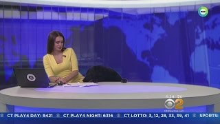 Dog Interrupts News Anchor In Russia During Broadcast