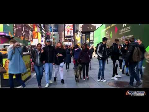 11-Month Old German Shepherd, Archer | Times Square Off Leash Heel | Off Leash K9