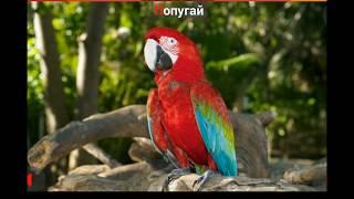 Названия птиц для детей. Как поют птицы. #Птицы