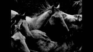 Emma Ruth Rundle - Darkhorse (full version)