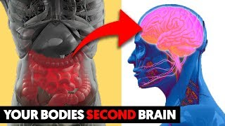 Your Body Has a Second Brain – Here is How It Impacts Your Health