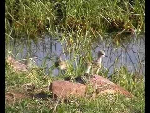 Water Birds of Bhopal