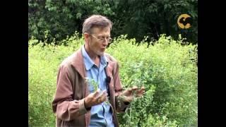 видео Пеларгония (герань). Уход и размножение // FORUMHOUSE