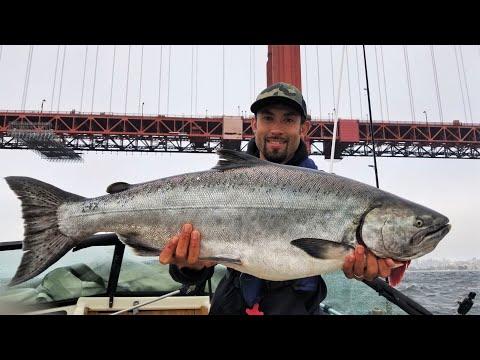 HOG Hunting For Huge King Salmon In California