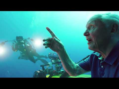 Trailer for David Attenborough's VR experiences at the Australian Museum, Sydney
