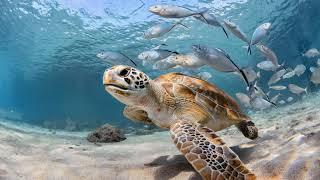 Картинка подводный мир. Море, под водой, рыбы, океан, черепаха. Sawirka adduunka hoosta. Badda