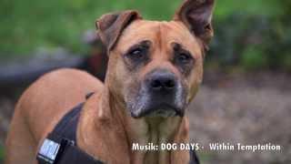 DOG DAYS - HUNDSTAGE (HD version)