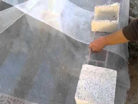 Como crear un vivero de caracoles part 1 youtube for Como establecer un vivero