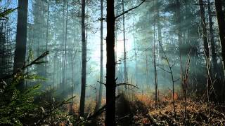 Sibelius: Tapiola, symphonic poem for orchestra Op. 112 (Segerstam, Helsingin kaupunginorkesteri)