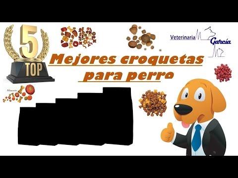 TOP 5 DE LAS MEJORES CROQUETAS PARA PERRO