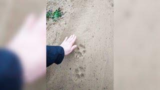 Все боятся! Эти животные больные! / Волки держат в страхе деревню под Браславом