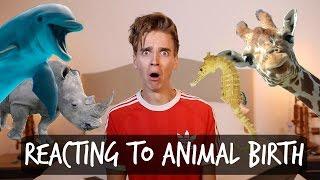 REACTING TO ANIMAL BIRTH