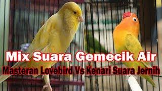 Download Mp3 Mix Suara Gemercik Air + Masteran Lovebird Vs Kenari Suara Jernih