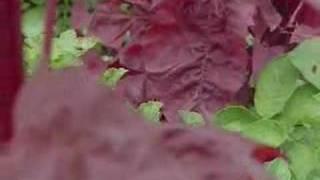 Permakultur - Landwirtschaft im Einklang mit der Natur - Sepp Holzer - Trailer zum Film