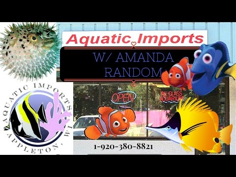 AQUATIC IMPORTS *Northern Wisconsin's premier marine fish store* With AMANDA RANDOM
