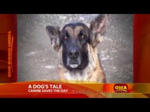 Hero Dog Leads Cop To Burning Home | Includes Cop Interview