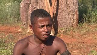 Video Baobabs, réservoirs de vie à Madagascar download MP3, 3GP, MP4, WEBM, AVI, FLV Oktober 2018