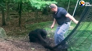 Baby Bear Rescued From Net by Police Officer | The Dodo