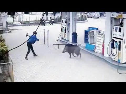 Shay Diddy - Wild Hog Runs Wild At A Gas Station, Sends Several People Flying!