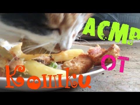 Виталик и Ангелина /АСМР от кошки и кур /на улице похолодало /Виталик в танке