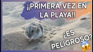 Llevo a mi hámster a la Playa   Cuidados y Advertencias