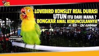 LOVEBIRD KONSLET REAL DURASI UTUN ITU DARI MANA ? BONGKAR AWAL KEMUNCULANNYA SAAT TAMPIL DI LAPANGAN