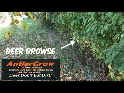 Antler Grow Spray Review