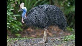 Jenis Burung Omnivora dan Karakteristik Yang Dimilikinya