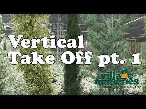 Vertical Take Off Part 1 - Village Nurseries