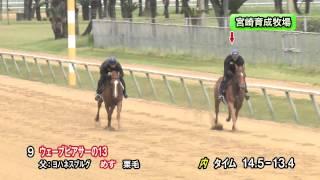 【2015育成馬展示会 調教映像】上場番号9 ウェーブピアサーの13