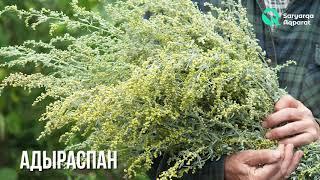 Емдік қасиеті зор үш өсімдік