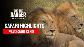 Idube Safari Highlights #470: 12 - 15 April 2017 (Latest Sightings) (4K Video)