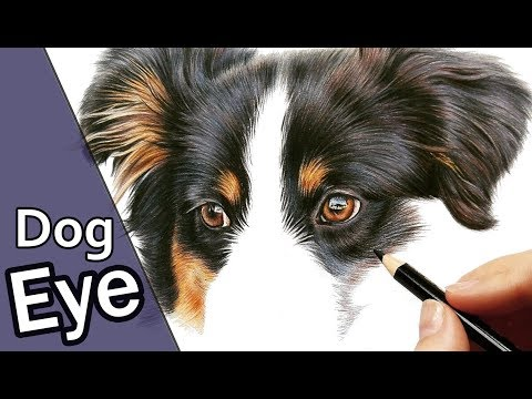 how-to-draw-a-realistic-dog-eye-in-colored-pencil