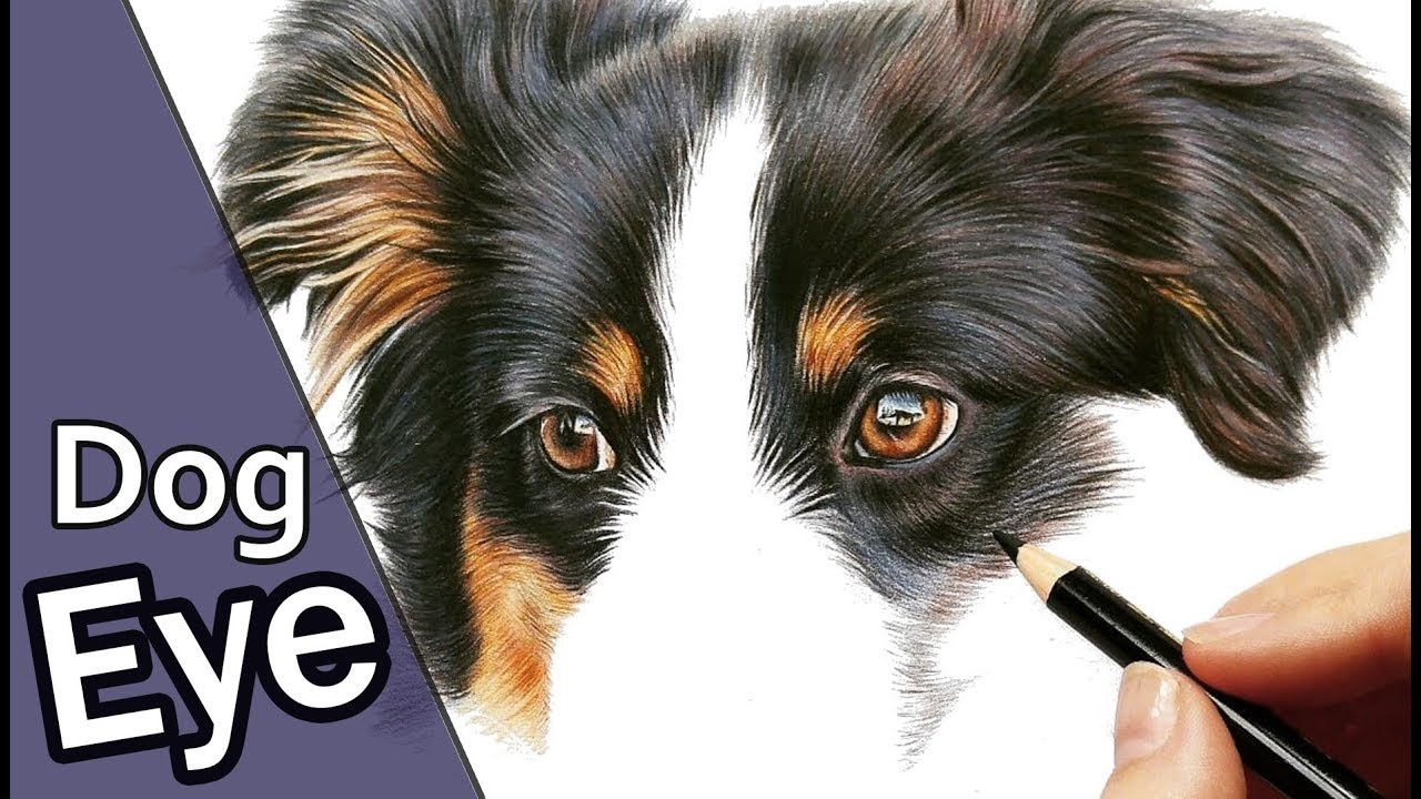 How to draw a REALISTIC dog eye in Colored Pencil