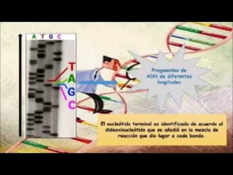 Secuenciacion ADN_Metodo Sanger