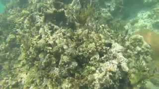 Catamaran Cruise and Snorkle in Costa Maya Mexico - Paul Glasspoole & Kari Guthrie