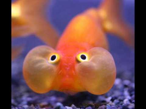 Los animales mas raros del mundo youtube - Los peces mas bonitos del mundo ...