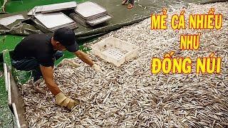 Gambar cover Ngư Dân Bắt Được Mẻ CÁ NHIỀU Như ĐỐNG NÚI/ Tỷ Tỷ Con Cá/ Catch a lot of fish   #36
