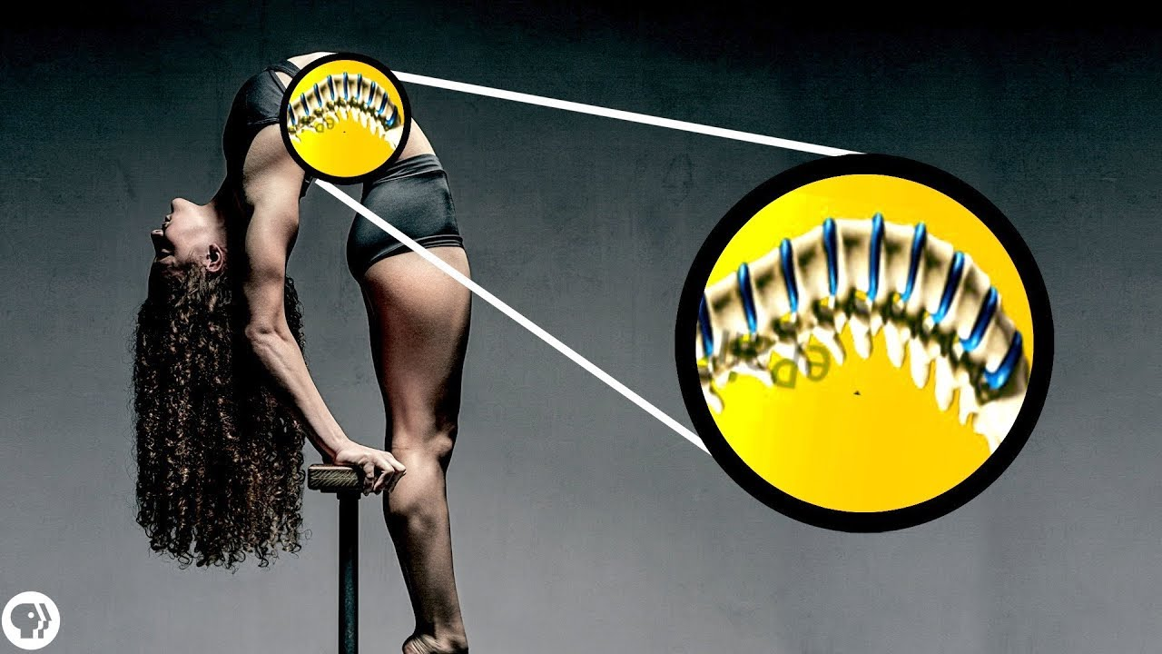 What stretching actually does to your body ft. Sofie Dossi image