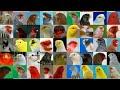 أغنية سلسلة أنواع طائر الكناري الحلقة 1 كناري اللون mp3