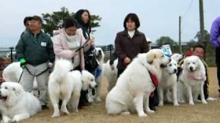 08.11.23熊本市に大型犬が大集合っ!!!