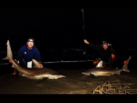 Shark Fishing NJ With Apex Anglers