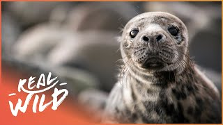 Orphan Seal Pup Gets Second Chance At Life | Nature's Newborns | Real Wild