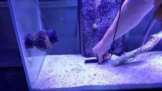 Reef Radiance Led Lights Optics Vs No Optics Par Test