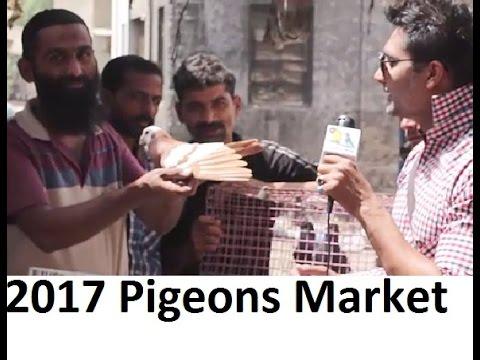 Pigeons Birds Market 2017 Pakistan - Price Check In $ - YT
