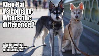 Alaskan Klee Kai vs Pomsky: What's the difference?