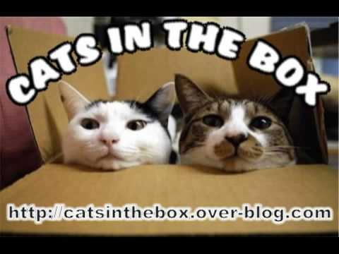 Cats In The Box - Green-tinted Sixties Mind