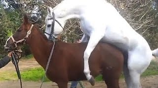 Animals Mating || Horse Mating Videos Compilation 2017 || Funny Animals 2017