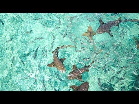 Freediving Hol Chan Marine Reserve, Belize | 4k
