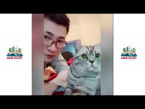 Funny: Cats, and Dogs, Compilation #21